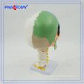 PNT-0153 3 piezas de modelo de calavera de color