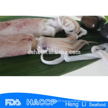 HL0088 illex squid tubes fresh frozen squid