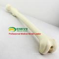 PORTA DE SIMULAÇÃO POR ATACADO 12318 Artificial Femur Skeleton Swabone Implant Practice Model