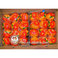 Kinnow Agrumes / Mandarine / Navel Valencia Orange / Mandarines