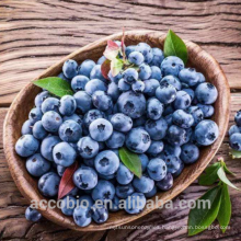 100% Natural Certificated Organic Dried Blueberry Plant Extract Powder