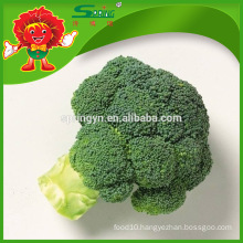 top grade broccoli frozen transportation no pesticide residue hotbed