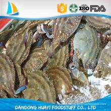 Einzelne schnelle Einfrieren Hauptsaison gefrorene frische blaue Krabbe