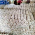 Distributeur / exportateur d'ail à l'agriculture 2016 en Chine
