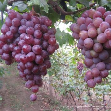 2019 new season xinjiang grape export sweet red grape wholesale
