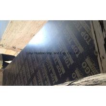 Encofrado de contrachapado / núcleo de álamo de madera contrachapada para usos concretos