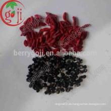 Secado Qinghai orgánico negro goji bayas / Negro goji bayas precio