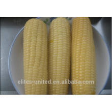 Congelados IQF Espiga de milho Espiga de milho doce