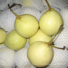 Fresh Chinese Ya Pear Yellow Color