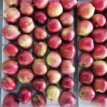 Manzanas Frescas Red Delicious Red Star Fruits