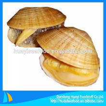 Chinese seafood supplier supply frozen surf clam with shell
