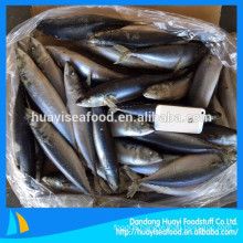 frozen new landing high quality mackerel fish with low price