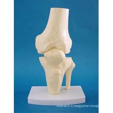 Modèle anatomique de squelette corporel des os humains pour l'enseignement médical (R020919)