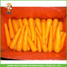 Gute Qualität Shandong Frische Karotte