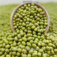 Top-Qualität grüne Mungobohnen Sprossen / Fälligkeit Preis