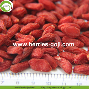Factory Supply Gezonde voeding Natural Lycium Fruit