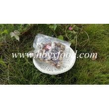 China Hubei secou o cogumelo de Shiitake da flor branca