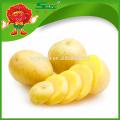 Potato yellow fresh large potatoes