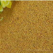 precio para el mijo de escoba de maíz