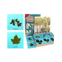 Leaf Represe...