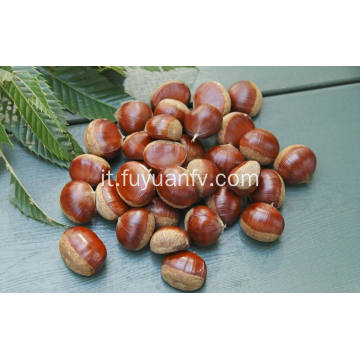 Fresh New Crop Good Price Delicious Chestnut