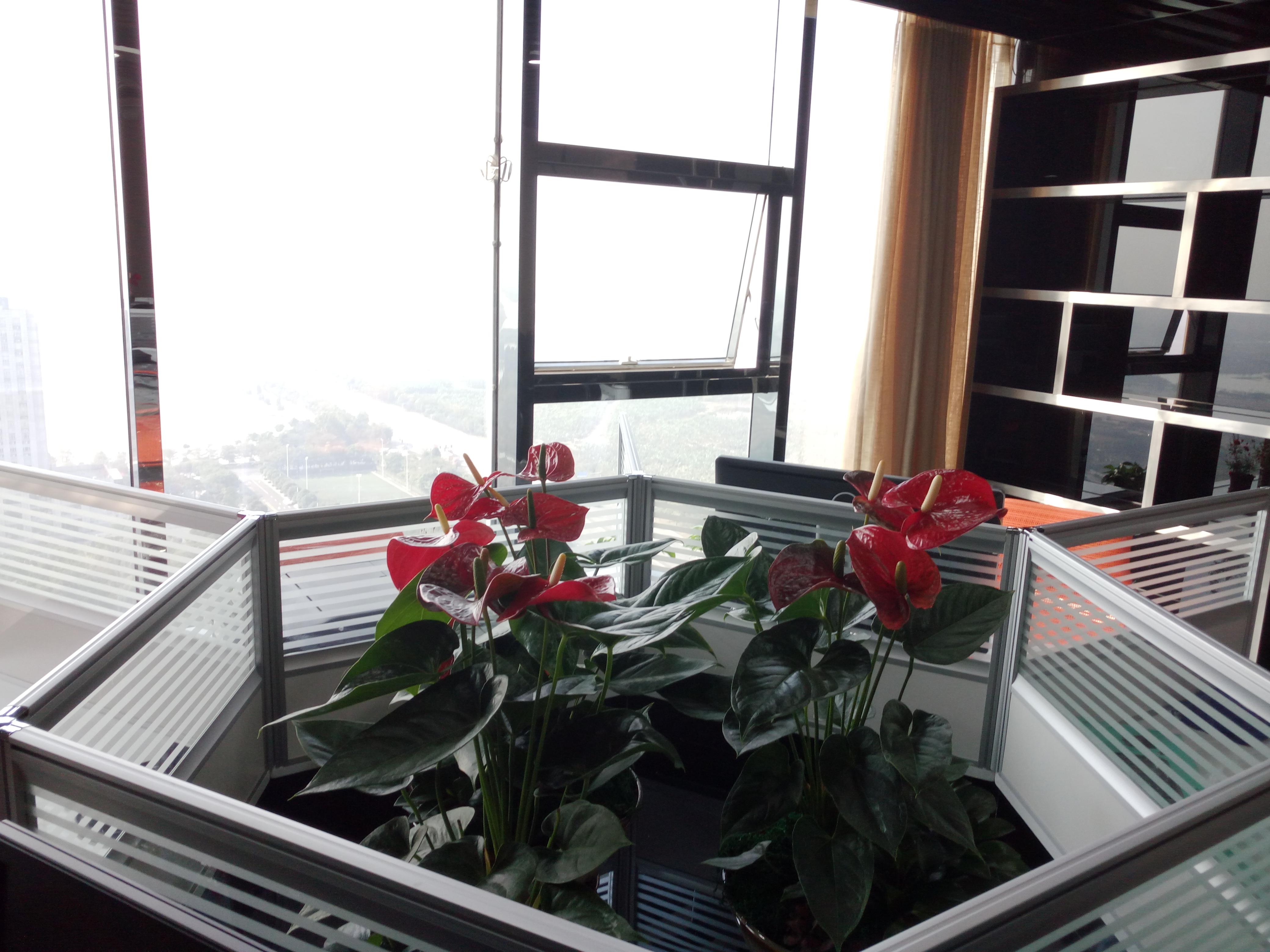 ETOP NEW OFFICE (4)