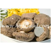 Alimento saudável natural secado Cogumelo liso