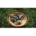 Chinese Dried White Back Black Fungus Cut Price