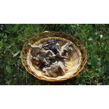 Champignon noir séché Champignon sauvage dos blanc