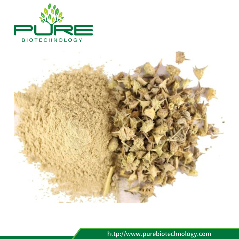 100% Natural Tribulus Terrestris Plant Fruit Extract Powder