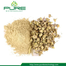 100% Asli Tribulus Terrestris Plant Fruit Extract Powder
