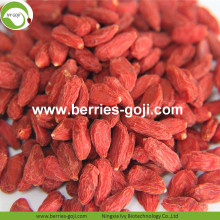 Perder peso Natural Dried Nutrition Tibetano Goji Berry