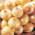 2016 New Arrival Fresh Yellow Onion on Hot Sale