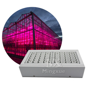 LED Grow Işık Reflektör 5W