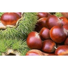 2016 New Season Fresh Chestnut en Precio Bajo China Origen