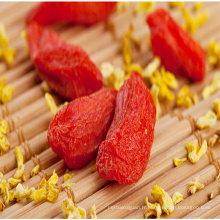 meilleurs fruits secs séchés baies de goji bio lycium barbarum