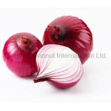 Cebolla roja de la cosecha fresca de la venta caliente; Venta caliente de cebolla fresca