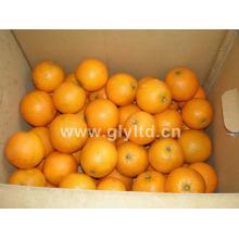 Bonne qualité Fresh Sweet Navel Orange
