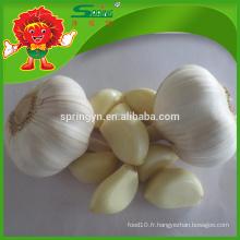 Vente en gros Ail blanc pur meilleur ail chinois