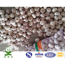 Normal White Garlic New Crop 2016 From China
