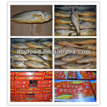 Hot sale yellow croaker gift box packaging