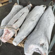 seafrozen black marlin HGT, super frozen blue marlin, white marlin fish