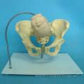 Положение черепа плода в женской тазовой модели для медицинского обучения (R170104)