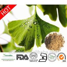 100% natürliche hochwertige Ginkgo biloba Extrakt Pulver
