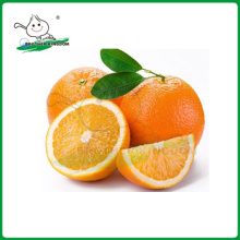 Navel orange Chinese Exporter