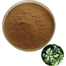 Indigowoad Leaf Extract powder Folium Isatidis P.E./Folium Isatidis extract