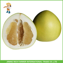 Best Price Wholesale Fresh Pomelo Buk Emballage