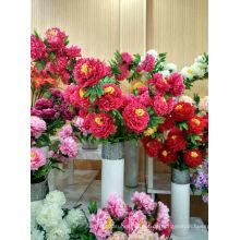 Pfingstrose Blumen von reich und blühend