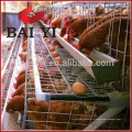 Тип 3 ступень 5 кл 120 курица птицы слой клетки