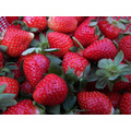 IQF congelación de fresa orgánica HS-16090901